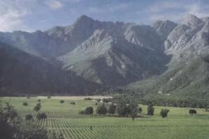 奢华优越的生态环境才能生长出好的葡萄品种佳丽