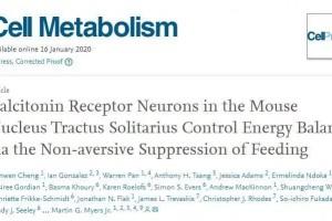 Cell子刊激活这个神经元能够按捺进食肥壮医治有路了
